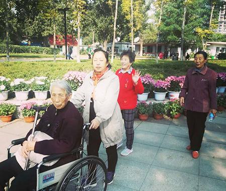 中山公园赏菊